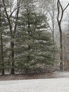 01-15-2021 Snow 07